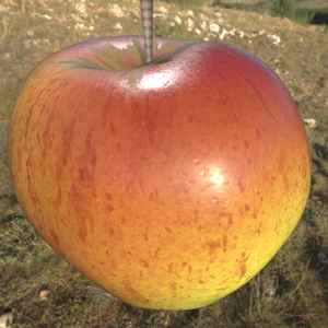 Red yello streaked apple