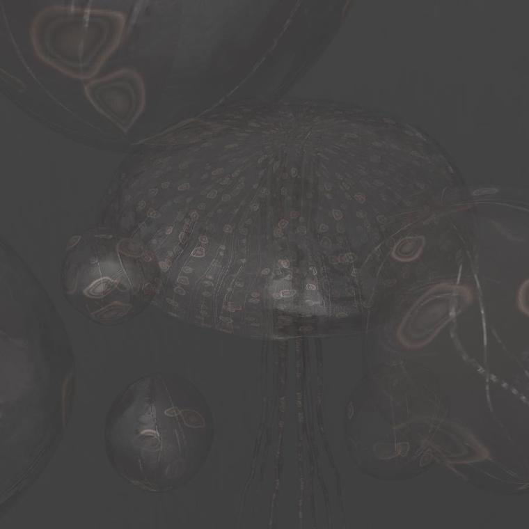 Jellyfishsd