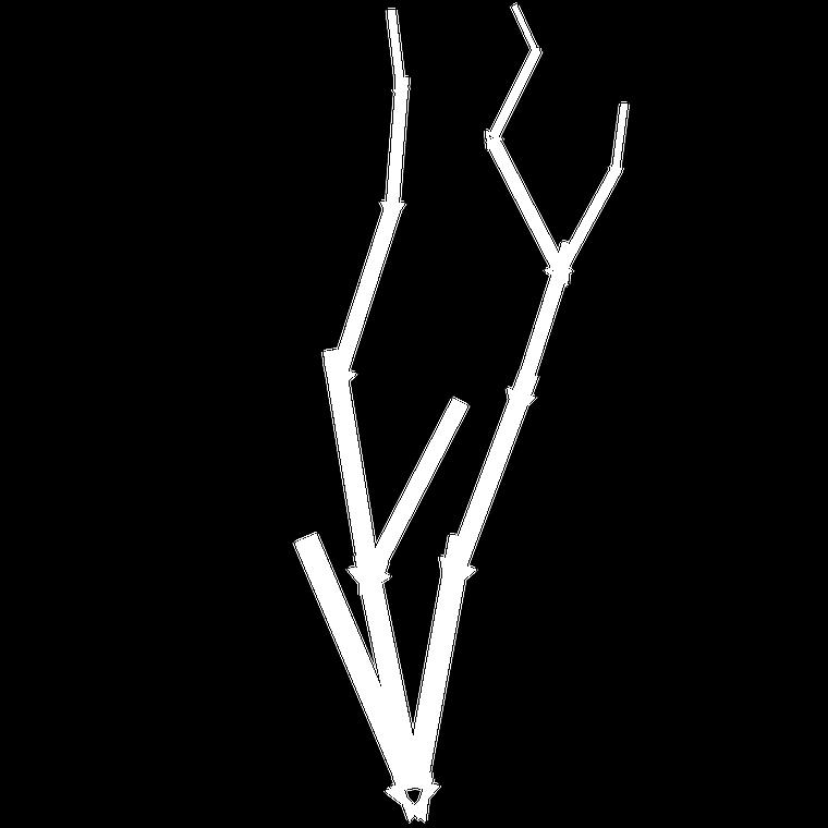 Branchgenbasiccover