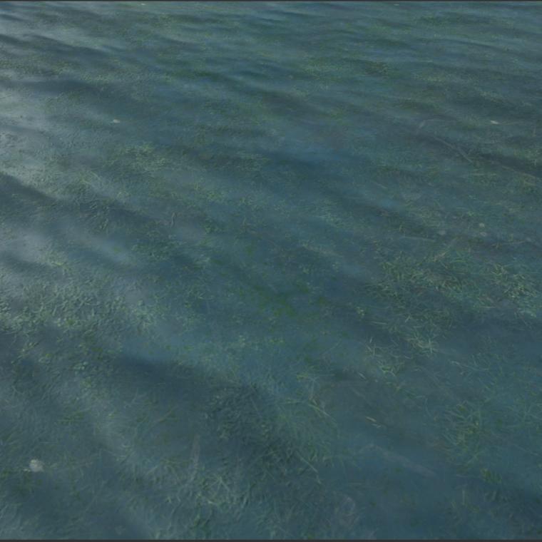 Seaweedwater