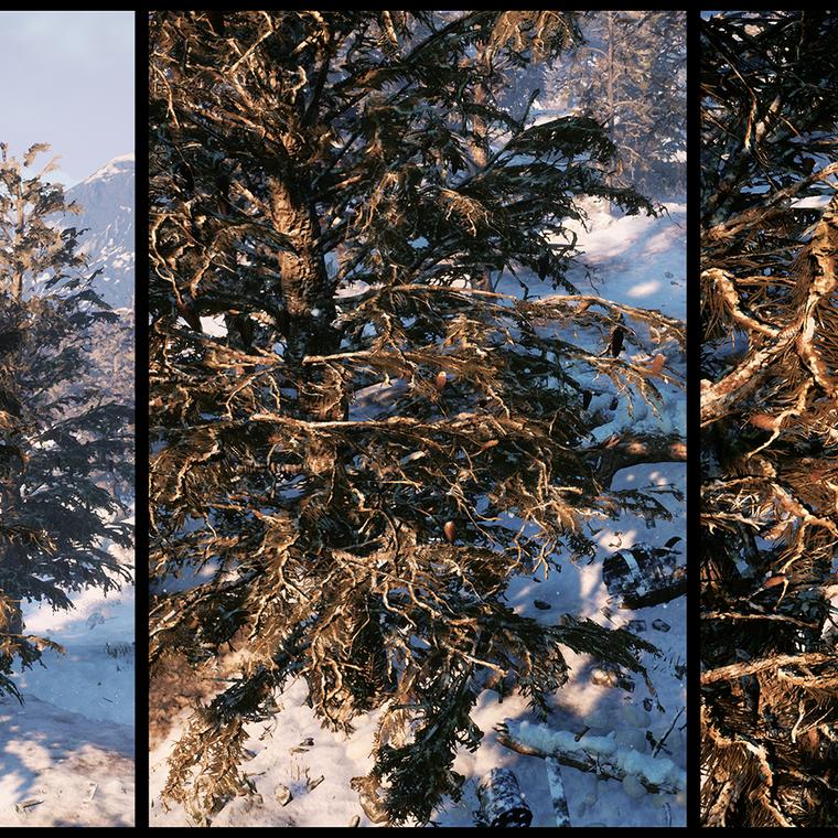 Conifertree