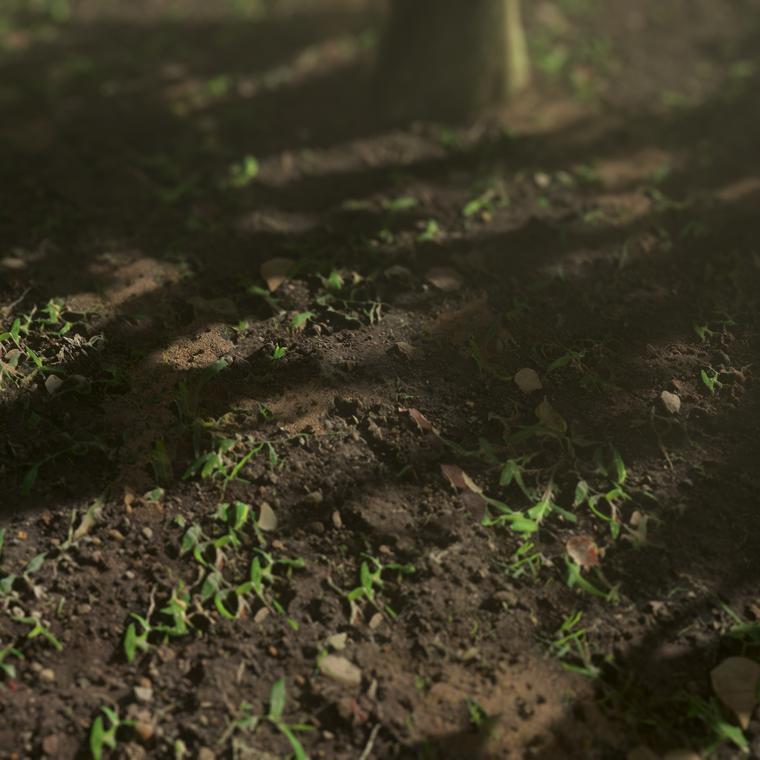 Dirt ground 01