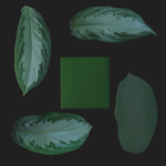 Aglaonema leaf sheet plane